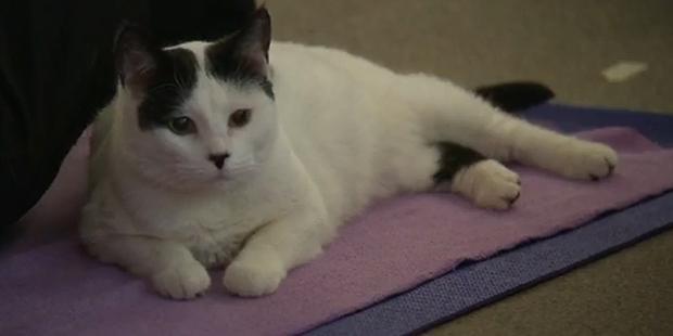cat-yoga-5
