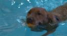 Dogs take a dip