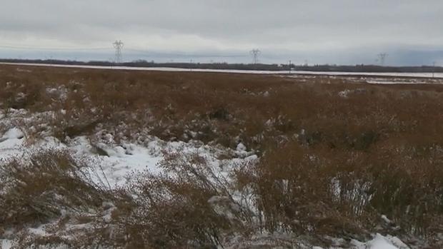 snow-crop-1